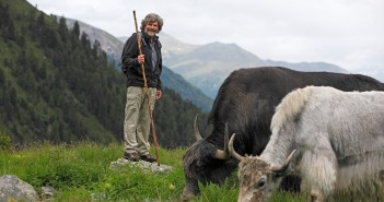 Suedtirol, Vinschgau, Ortlergebiet, Sulden, Jakauftrieb mit Reinhold Messner,