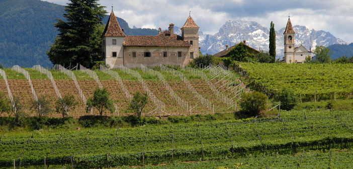 Weinfelder im Vinschgau